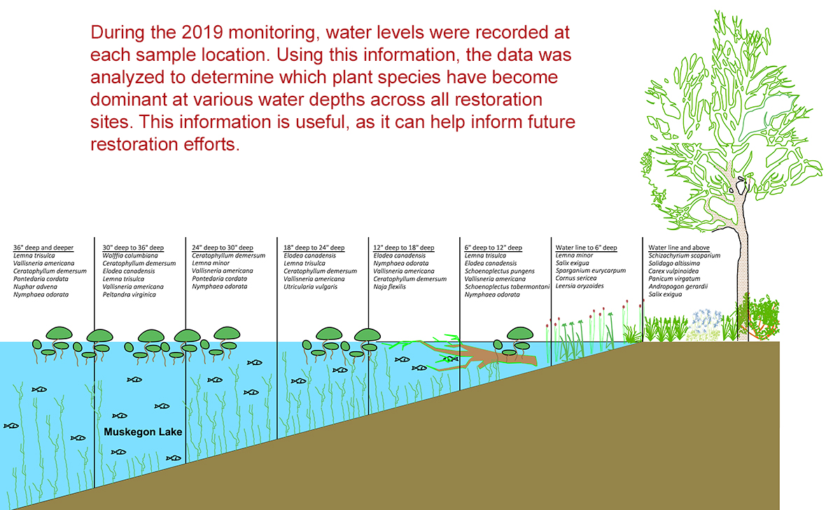MLWP | Water Levels
