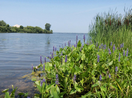 Muskegon Lake Watershed Partnership | Amoco
