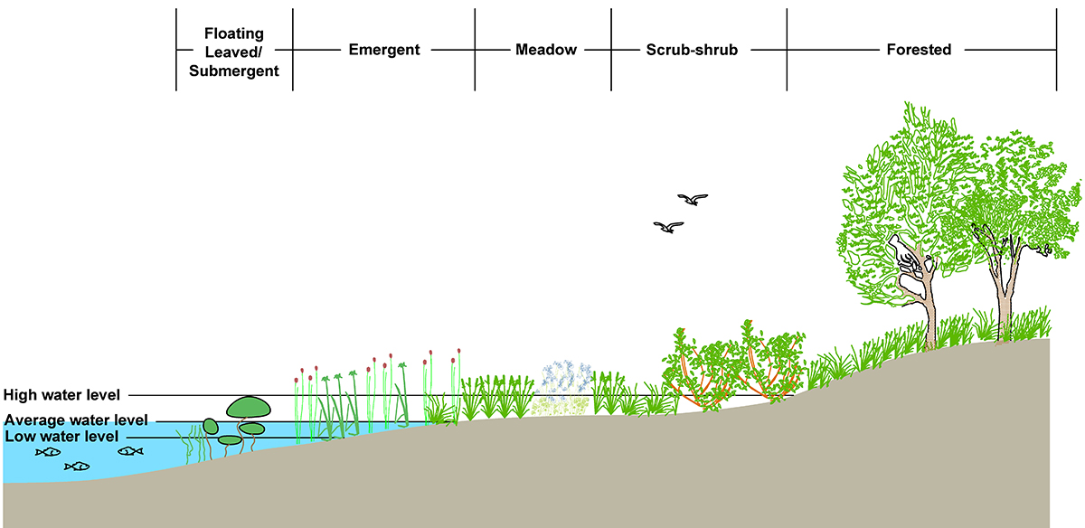 Coastal Wetlands Habitat Illustration