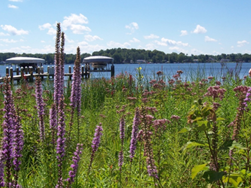 Shoreline BMP | Native Plant Buffer