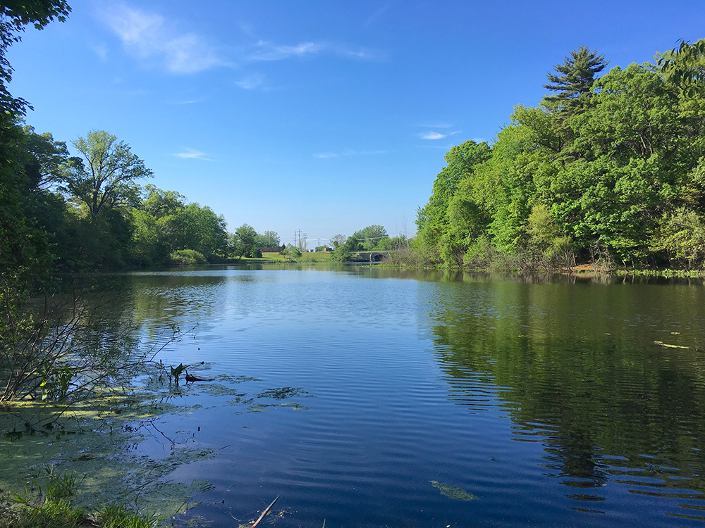 MLWP Sub Watersheds | Ruddiman Creek